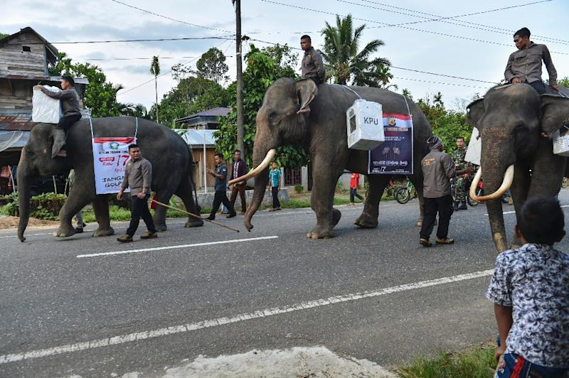 Election officials in Sumatra enlisted three critically endangered elephants to boost voter numbers and raise awareness about their dwindling numbers (AFP Photo/CHAIDEER MAHYUDDIN)