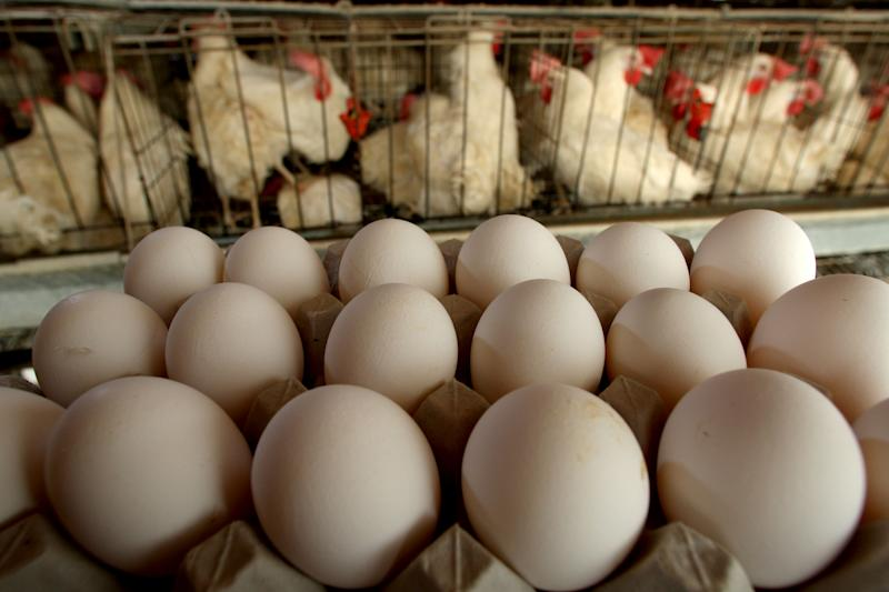 More Than 200 Million Eggs Are Being Recalled in Nine States Amid Salmonella Fears