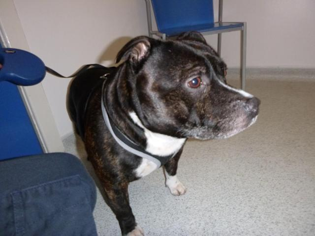 Cracker - real name Rooney - will be reunited with his family (RSPCA)