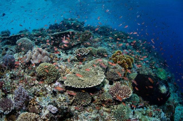 Research: Global warming disrupts recovery of coral reefs