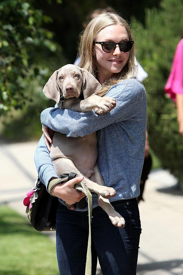 "Although Amanda Seyfried has a dog of her own -- an Aussie Shepherd named Finn -- she's got plenty of puppy love to go around! The ""Dear John"" actress was spotted cuddling with her brother's pet Weimaraner in West Hollywood, California, after a trip to the groomers. Matt Smith/Jeff Steinberg/<a href=""http://www. PacificCoastNews.com"" target=""new"">PacificCoastNews.com</a> - May 19, 2010"