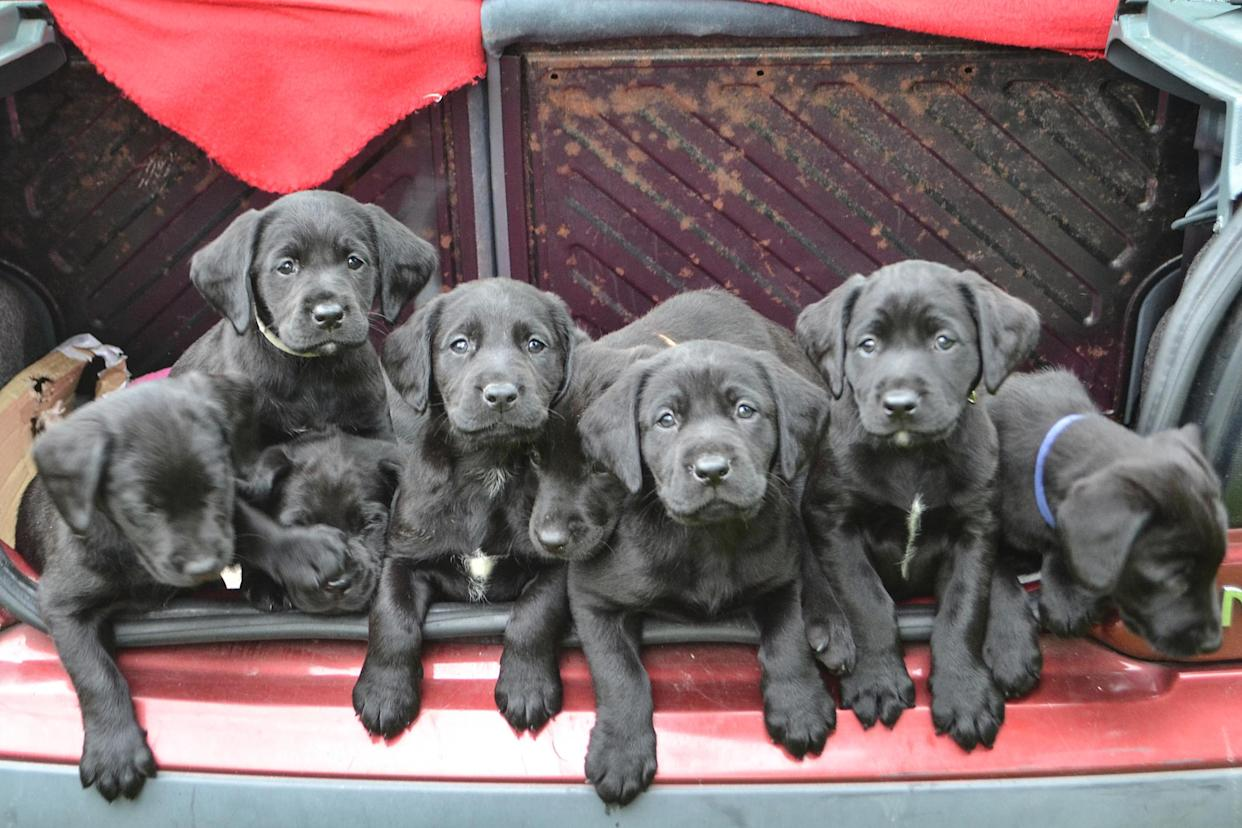 <em>Ill – a third of puppies bought online die or fall ill within their first year, the poll revealed (Picture: Getty)</em>
