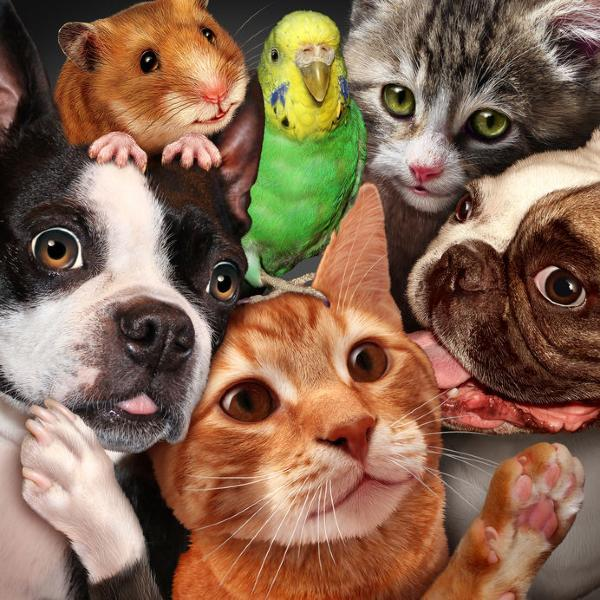 renting with pets, Apartments with pets, pet friendly rentals, Pet friendly apartments, Housing association rules on pets, owning a pet