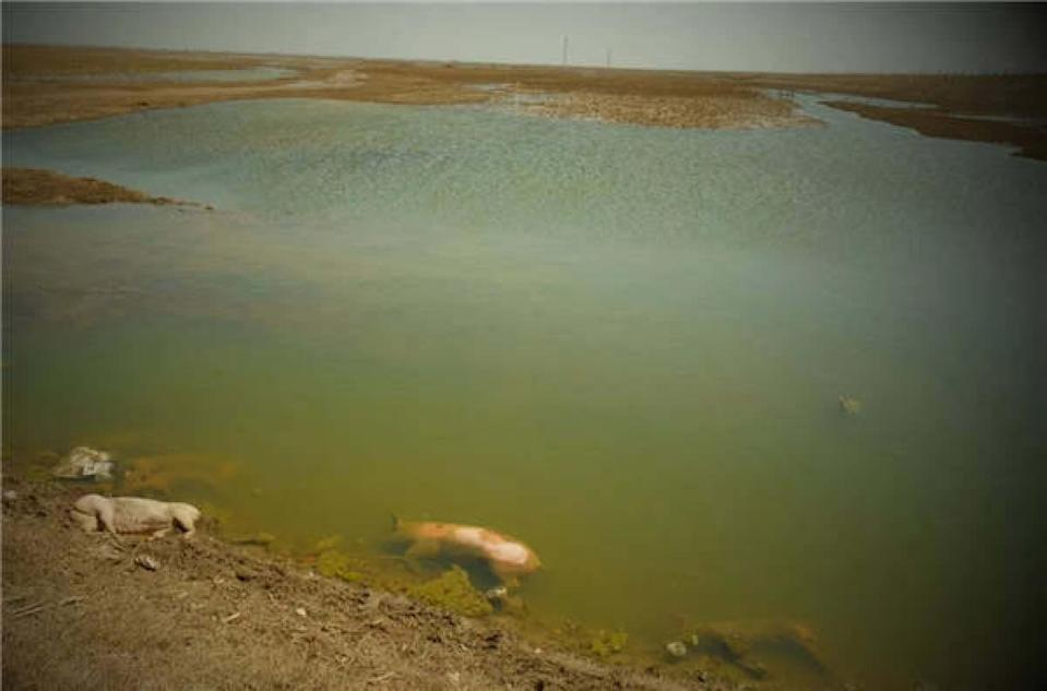The discovery of the bodies has triggered concerns of water contamination. Photo: China Comment