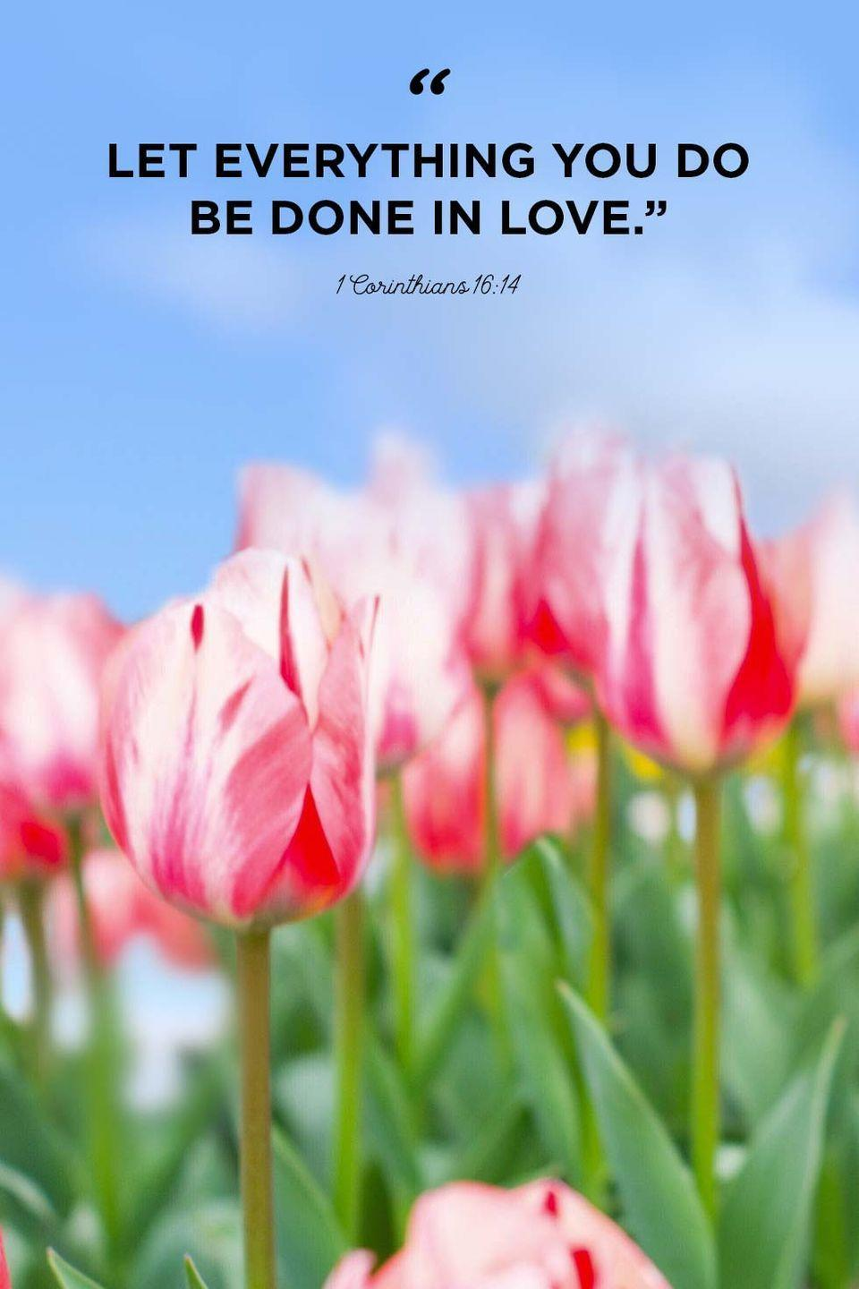 """<p>""""Let everything you do be done in love.""""</p>"""