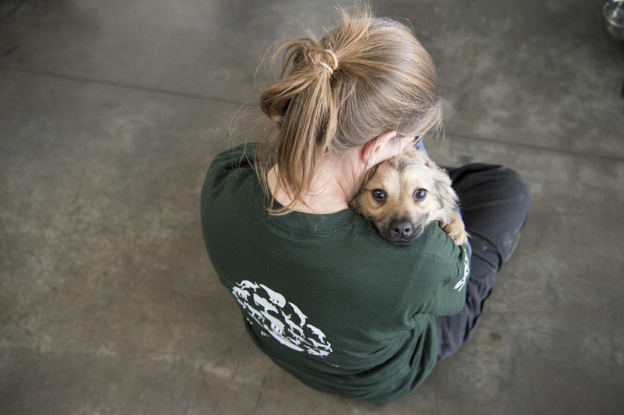 <p>In this image released on Thursday, April 28, 2016, an HSI rescuer snuggles with a dog at the Incheon airport before his flight to the US. Humane Society International rescued the dogs from a dog meat farm in Wonju, South Korea this week, the fifth such farm that the organization has closed down as part of its campaign to end the dog meat trade. A total of 171 dogs are being flown to shelters and rescues in the United States and Canada for a second chance at life. (Meredith Lee/Humane Society International via AP Images) </p>