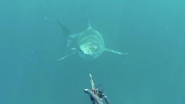 This is the moment Mr Levingston stared into the shark's eyes. Photo: Facebook