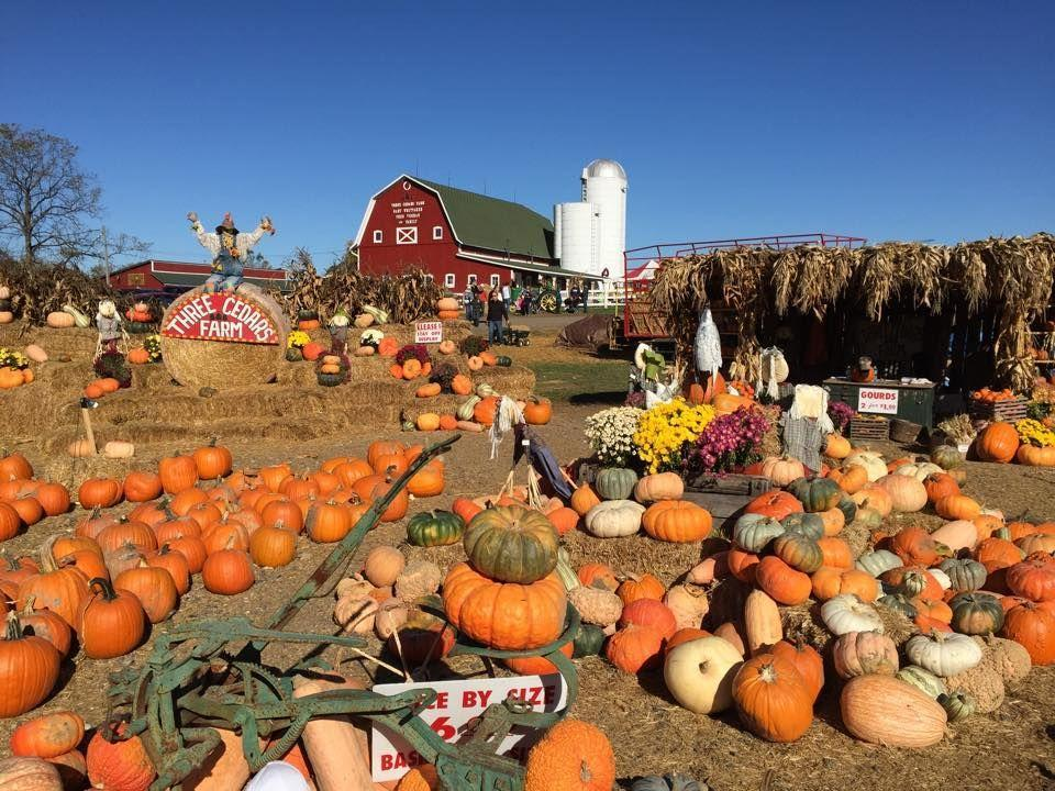 """<p>With hayrides, a u-pick pumpkin patch, a 7-acre <a href=""""https://www.countryliving.com/life/travel/g22717241/corn-maze-near-me/"""" rel=""""nofollow noopener"""" target=""""_blank"""" data-ylk=""""slk:corn maze"""" class=""""link rapid-noclick-resp"""">corn maze</a>, train rides, and rentable bonfire pits on the property, your group will find plenty to do at <a href=""""https://threecedarsfarm.org/"""" rel=""""nofollow noopener"""" target=""""_blank"""" data-ylk=""""slk:Three Cedar's Farm"""" class=""""link rapid-noclick-resp"""">Three Cedar's Farm</a> in <a href=""""https://go.redirectingat.com?id=74968X1596630&url=https%3A%2F%2Fwww.tripadvisor.com%2FTourism-g42532-Northville_Michigan-Vacations.html&sref=https%3A%2F%2Fwww.countryliving.com%2Flife%2Ftravel%2Fg21273436%2Fpumpkin-farms-near-me%2F"""" rel=""""nofollow noopener"""" target=""""_blank"""" data-ylk=""""slk:Northville, Michigan"""" class=""""link rapid-noclick-resp"""">Northville, Michigan</a>. </p><p><a class=""""link rapid-noclick-resp"""" href=""""https://go.redirectingat.com?id=74968X1596630&url=https%3A%2F%2Fwww.tripadvisor.com%2FAttractions-g42532-Activities-Northville_Michigan.html&sref=https%3A%2F%2Fwww.countryliving.com%2Flife%2Ftravel%2Fg21273436%2Fpumpkin-farms-near-me%2F"""" rel=""""nofollow noopener"""" target=""""_blank"""" data-ylk=""""slk:PLAN YOUR TRIP"""">PLAN YOUR TRIP</a><br></p>"""