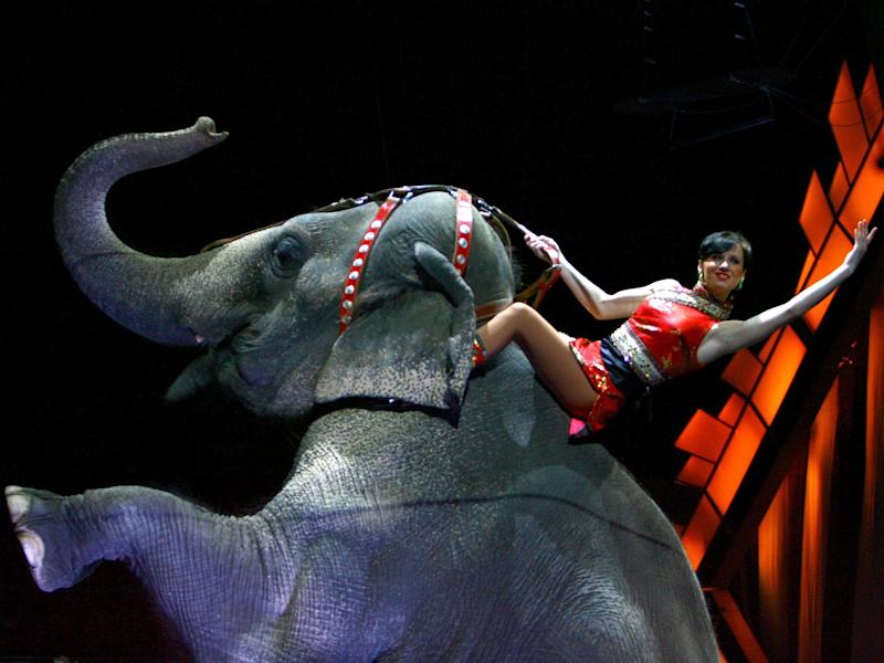 A performer rides an elephant during a live performance at Madison Square Garden in New York City: Scott Wintrow/Getty Images