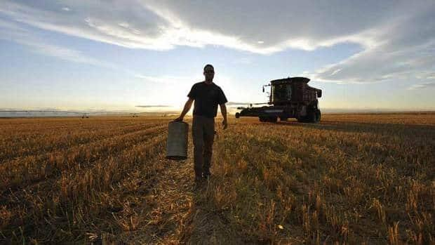 The Edmonton region sits atop of a third of Alberta's highest-quality black soil. A new draft master plan looks to conserve that land and grow the region's agricultural industry for future generations.  (Todd Korol/Reuters - image credit)