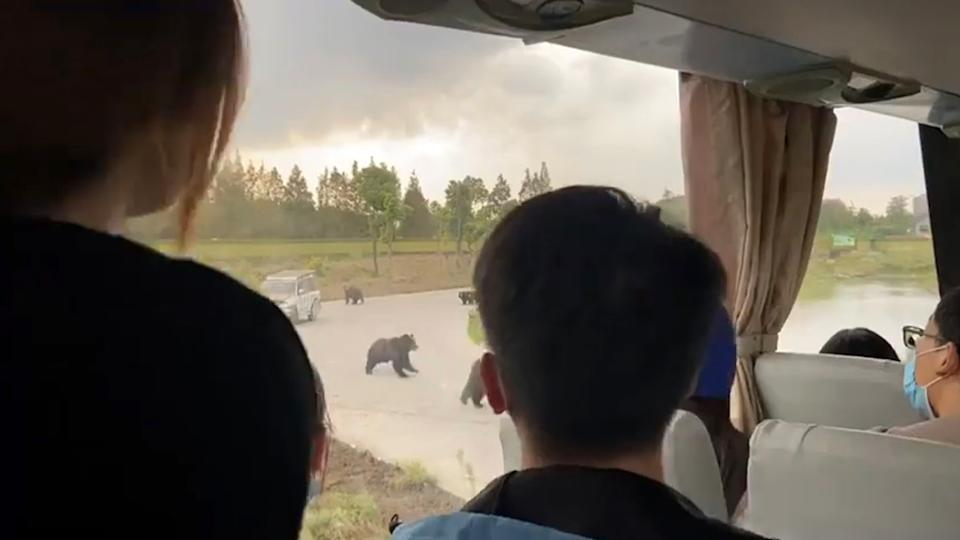 People pictured watching wild bears from inside a bus.