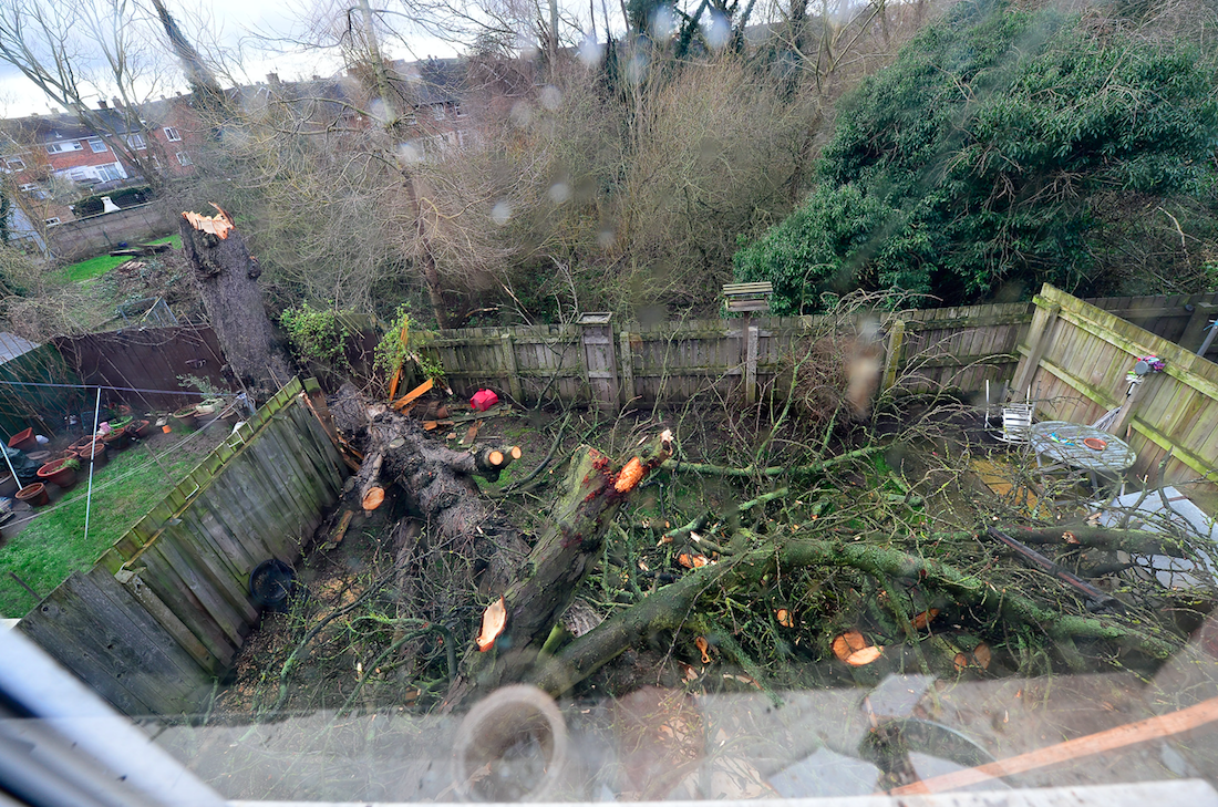 Pieces of the tree in the property's garden after the storm (Picture: SWNS)