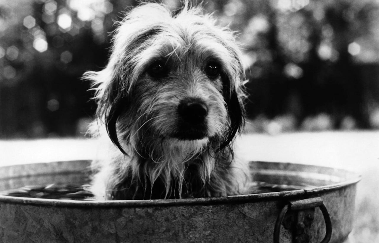 """<p>A sweet dog is abandoned, but never fear! He is adopted by a loving family, gets into plenty of mischief, and becomes a major hero when two kids are abducted.</p> <p><a href=""""http://www.netflix.com/title/296682"""" target=""""_blank"""" class=""""ga-track"""" data-ga-category=""""Related"""" data-ga-label=""""http://www.netflix.com/title/296682"""" data-ga-action=""""In-Line Links"""">Watch <strong>Benji</strong> on Netflix.</a></p>"""
