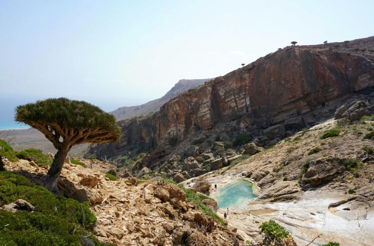 A Dragon's Blood Tree grows on a hillside at Homhil in the northeast of the Yemeni island of Socotra, a species found only on the Indian Ocean archipelago