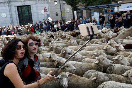 Women take a selfie next to a flock of sheep during the annual sheep parade through Madrid