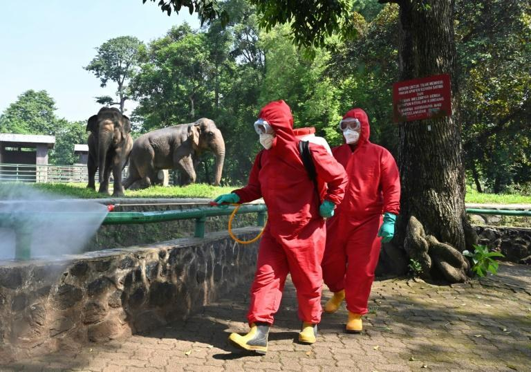 Indonesian fire fighters spray disinfectant next to elephants at the Ragunan zoo ahead of its reopening in Jakarta