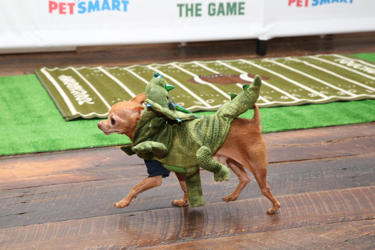 <p>He doesn't even seem alarmed that there's a Triceratops on his back! <i>(Photo: Petsmart)</i></p>
