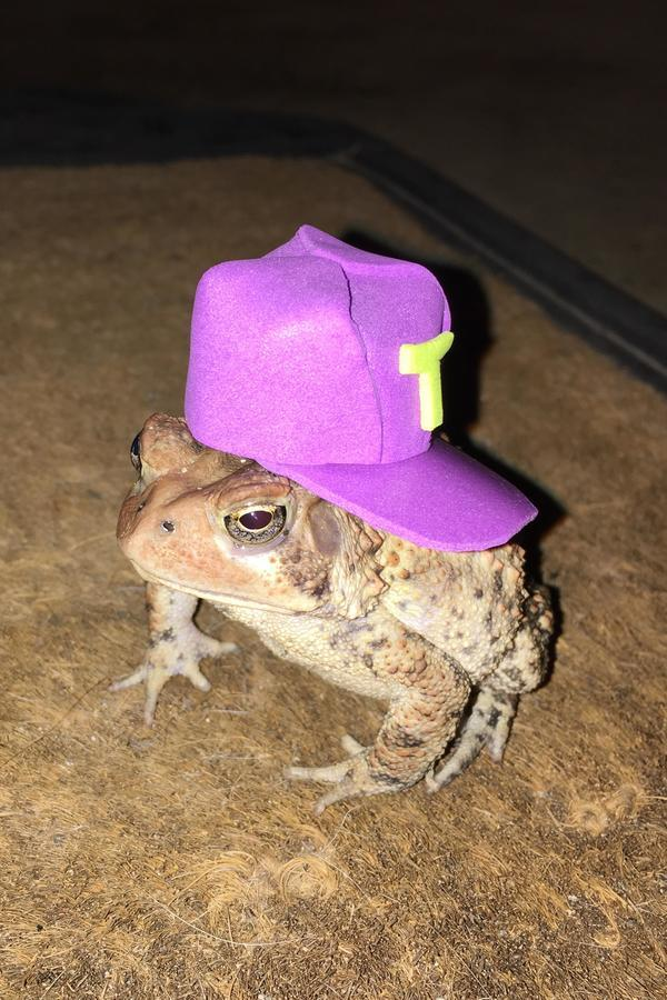 An Alabama Man Makes Incredible Hats For His Little Toad