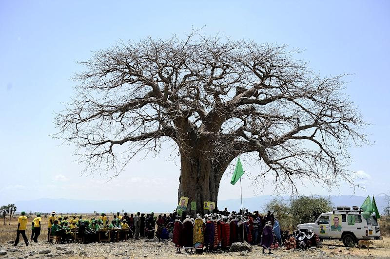 Deaths of African baobab trees linked to climate change