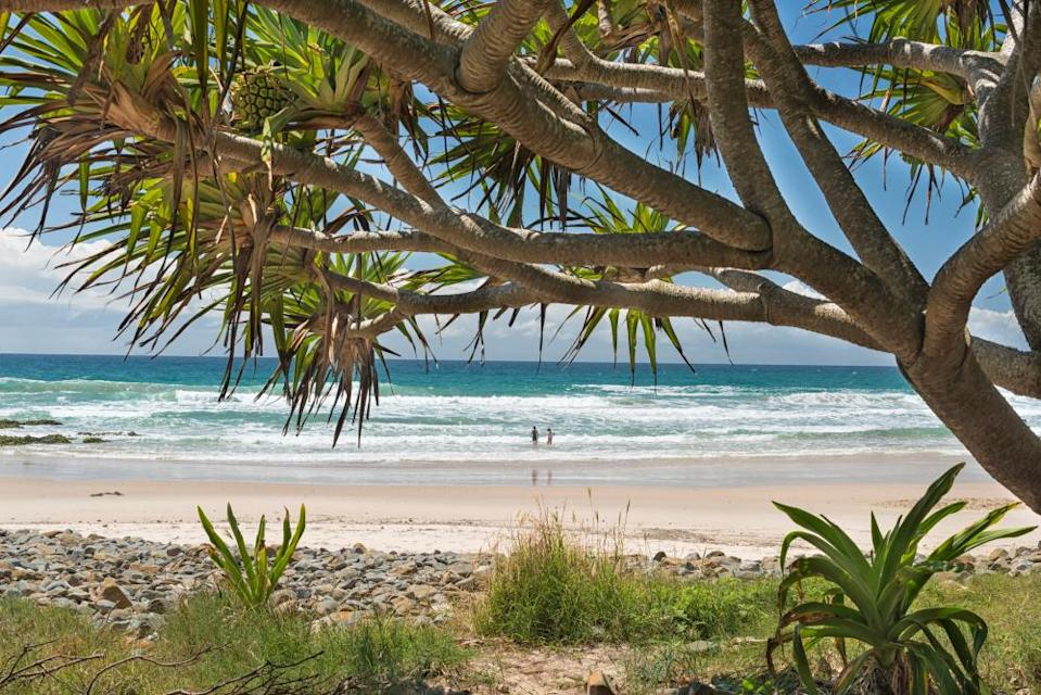 Cabbage tree and view to the beach at Broken Head nature reserve