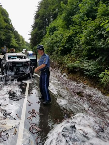 In this photo provided by the Oregon State Police, a state police officer works the site after a truck hauling eels overturned on Highway 101 in Depoe Bay, Ore., Thursday, July 13, 2017. Police said Salvatore Tragale was driving north with 13 containers holding 7,500 pounds (3,402 kilograms) of hagfish, which are commonly known as slime eels. (Oregon State Police via AP)