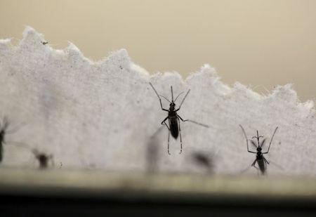 Puerto Rico declares Zika outbreak over; CDC maintains travel warning