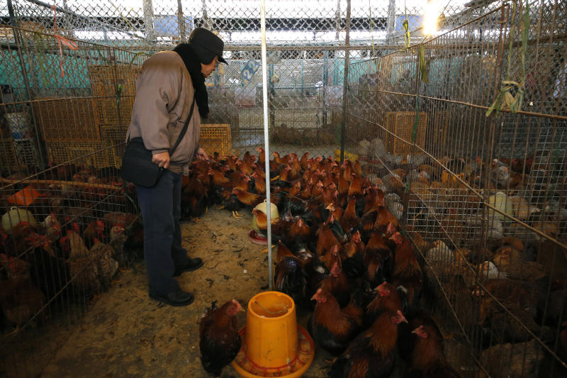 In this Tuesday Jan. 21, 2014 photo, a man picks chickens at a wholesale poultry market in Shanghai. A spate of bird flu cases since the beginning of the year in China has experts watching closely as millions of people and poultry are on the move ahead of the Lunar New Year holiday, the world's largest annual human migration. (AP Photo)