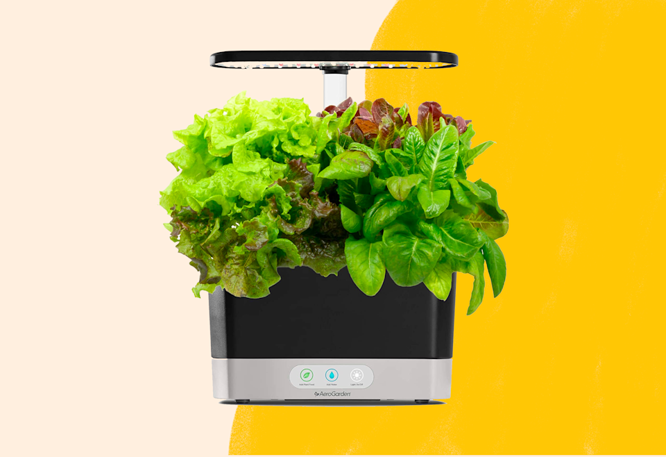 Pick up an AeroGarden for under $90 today at Amazon.