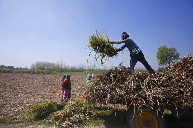 agriculture, agriculture sector