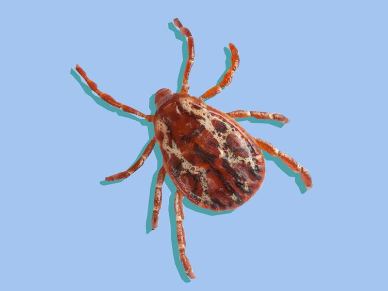 Here's Exactly What to Do if a Tick Bites You