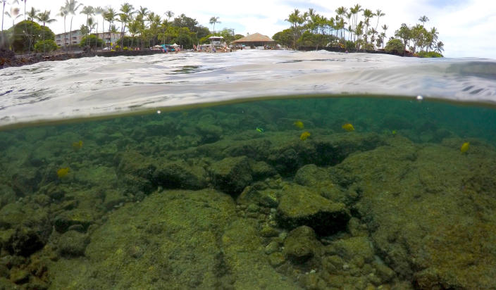 FILE - In this Sept. 12, 2019, file photo, fish swim near coral in Kahala'u Bay in Kailua-Kona, Hawaii. Flooding in March 2021 in Hawaii caused widespread and obvious damage. But extreme regional rain events that are predicted to become more common with global warming do not only wreak havoc on land, the runoff from these increasingly severe storms is also threatening Hawaii's coral reefs. (AP Photo/Caleb Jones, File)