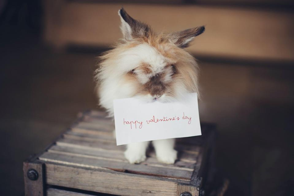 """<p> Let's all take a minute to honor the adorable rabbit holding this Valentine's Day note.</p> <p><a href=""""http://media1.popsugar-assets.com/files/2021/01/04/988/n/1922507/3e02b984e40107a0_helena-lopes-bE4QK-Df1Fo-unsplash/i/valentine-day-zoom-backgrounds.jpg"""" class=""""link rapid-noclick-resp"""" rel=""""nofollow noopener"""" target=""""_blank"""" data-ylk=""""slk:Download this Zoom background image here."""">Download this Zoom background image here. </a></p>"""