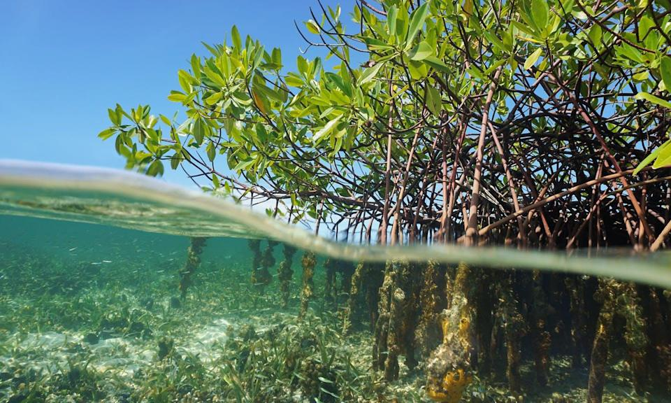"""<span class=""""caption"""">Seabed sediments in Bermuda mangroves consumed nitrous oxide from the seawater. Restoring coastal ecosystems might help curb climate change.</span> <span class=""""attribution""""><span class=""""source"""">(Shutterstock)</span></span>"""