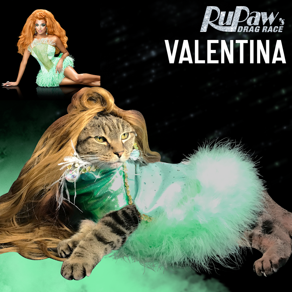 "<p>""We recently hit 50,000 followers and can not thank our fans enough for all of the likes, the comments and the Ru-posting! We're making cat queen herstory! To all of the kitty girls and kitty boys out there and everyone in between, we have one thing to say, 'YOU BETTA WORK!'"" Rogers added for all the followers of the account. </p>"