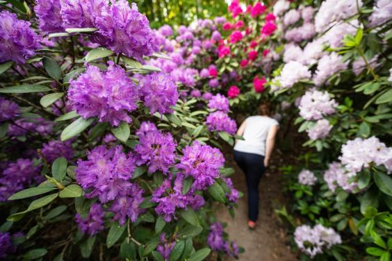 Take some time to stop and smell the flowers (istock)