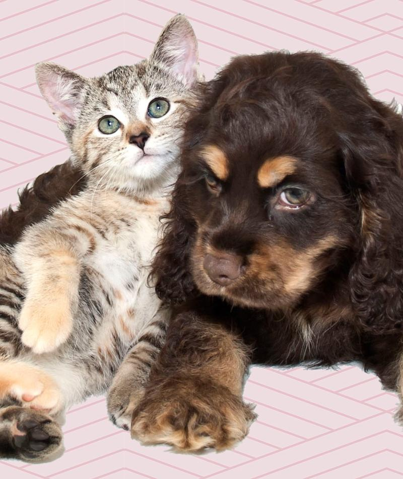 Do These 3 Things Before Adopting a Pet