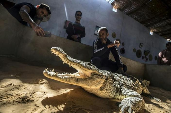 Mamdouh Hassan (R) shows a crocodile to visitors at his crocodile terrarium in the Nubian village of Gharb Soheil, on the west bank of the Nile river in southern Egypt (AFP Photo/Khaled DESOUKI)