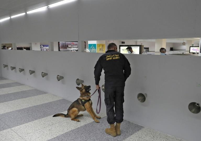 The samples are placed in a long line of cones for the sniffer dog to check with a speed and accuracy that Dr Sarkis says makes the method ideal for use in places like airports or entertainment venues