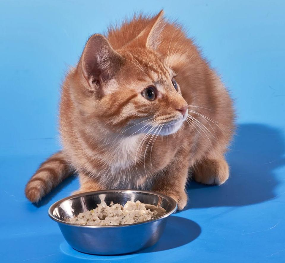 """For cats who are curious, <a href=""""https://fave.co/3iTdVFA"""" target=""""_blank"""" rel=""""noopener noreferrer"""">Smalls</a> offers cat food with recipes picked to match your cat's preferred foods and flavors. You first get a sampler to see what your cat <i>really</i> responds to. <a href=""""https://fave.co/3iTdVFA"""" target=""""_blank"""" rel=""""noopener noreferrer"""">Smalls</a> has litter, plus wet and dry foods.<br /><br />Check out <a href=""""https://fave.co/3iTdVFA"""" target=""""_blank"""" rel=""""noopener noreferrer"""">Smalls' subscription for cat food</a>."""