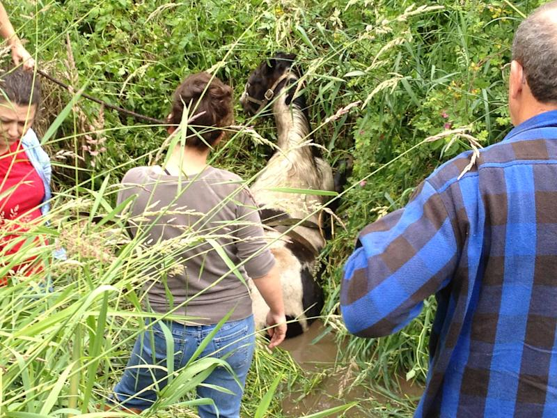 Missy the horse was rescued on Sunday. (Marion County Fire District No. 1)