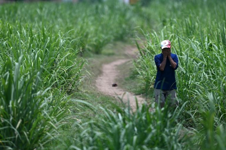 A man is seen a sugar cane field near the house of former police officer Hugo Ernesto Osorio Chavez