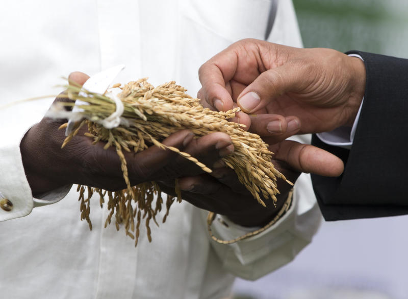 U.S. President Barack Obama looks at rice crops during a food security expo on Friday, June 28, 2013, in Dakar, Senegal. Obama met with farmers, innovators, and entrepreneurs whose new methods and technologies are improving the lives of smallholder farmers throughout West Africa. (AP Photo/Evan Vucci)