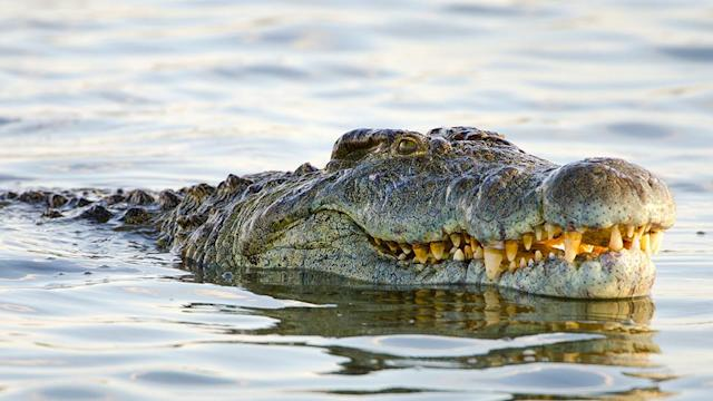 An 11-year-old girl saved her friend from the jaws of a crocodile by gouging its eyes. Source: Getty Images
