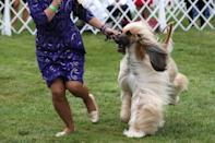 The 145th Westminster Kennel Club Dog Show at Lyndhurst Mansion in Tarrytown, New York