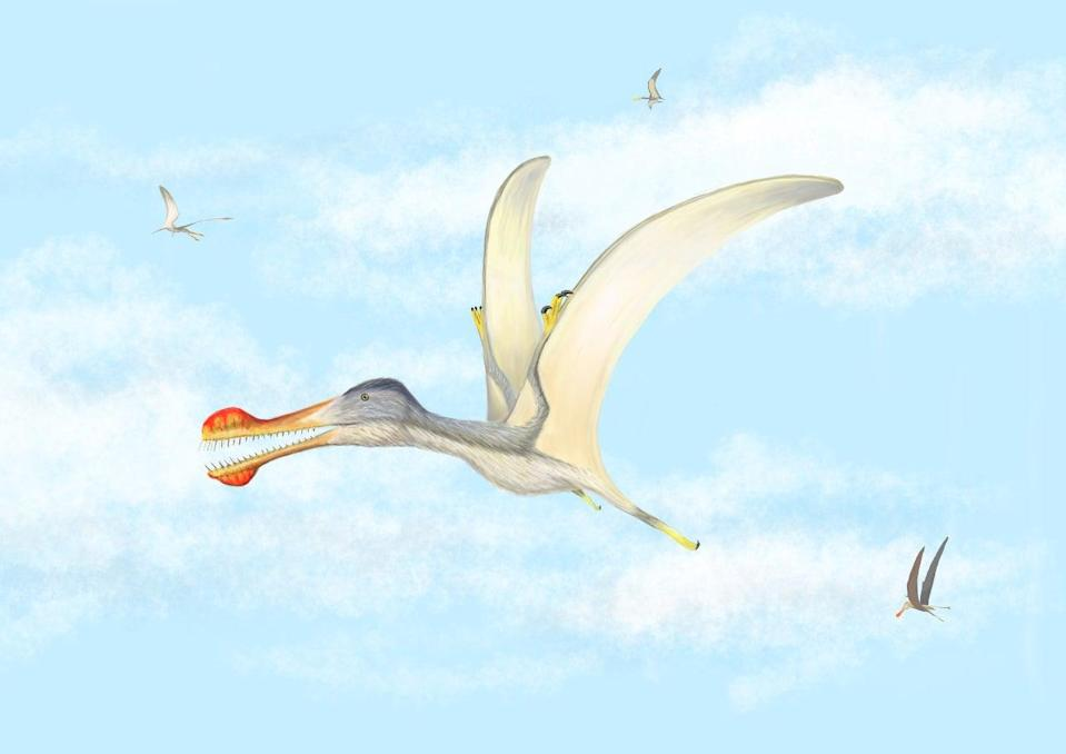 Newly-hatched pterosaurs may have been able to fly, according to scientists (University of Portsmouth/PA) (PA Media)