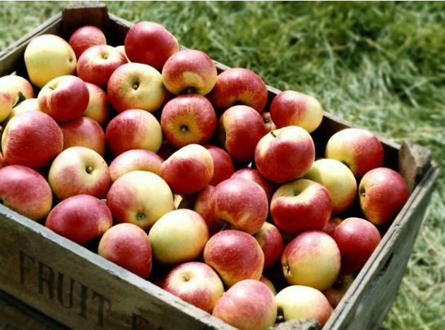 <b>Apples</b> are one of the most popular negative calorie foods. This means that an apple burns more calories that it adds to the body, while being digested, making for a great, tasty snack that does nothing to add to body fat.