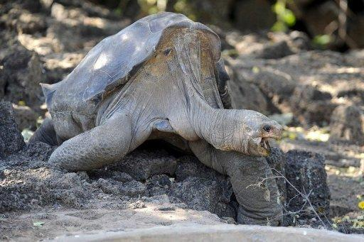 The only remaining Pinta Island tortoise, Lonesome George, has died