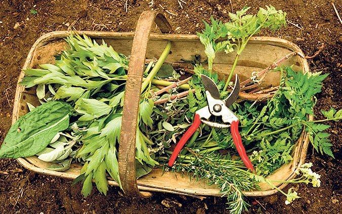 Thyme in a basket