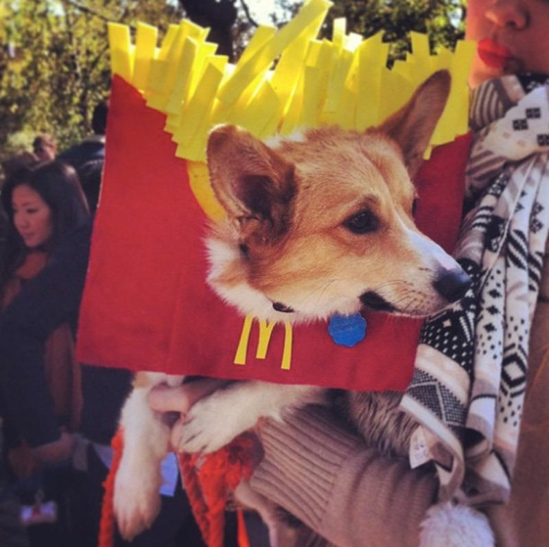 <p>If you're looking to dress your dog up like an American staple, look no further than the McDonald's fries. This is sure to be a crowd favorite no matter the size. Use red and yellow felt attached to your puppy's collar to make this yourself. <i>Photo: Instagram/ @rach.ac.</i></p>