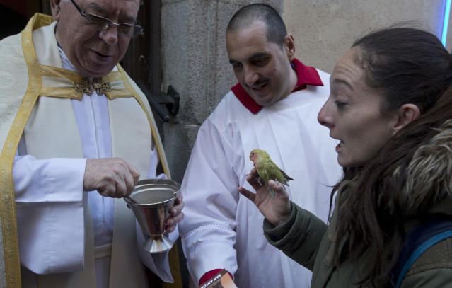 <p>A priest prepares to anoint a small bird at the San Anton church during the feast of Saint Anthony, Spain's patron saint of animals, in Madrid, Wednesday, Jan. 17, 2018. (Photo: Paul White/AP) </p>